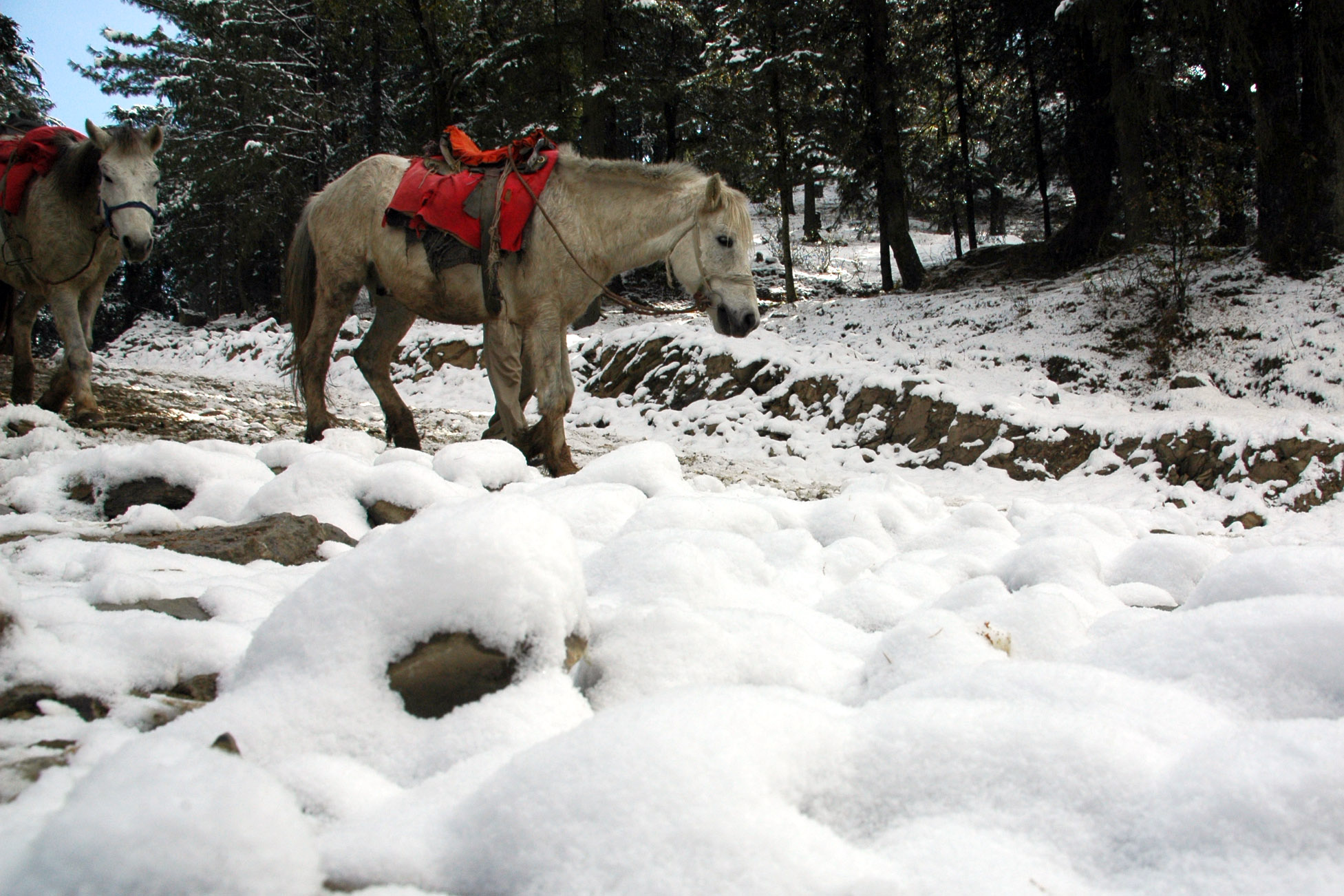 essay on snowfall in shimla