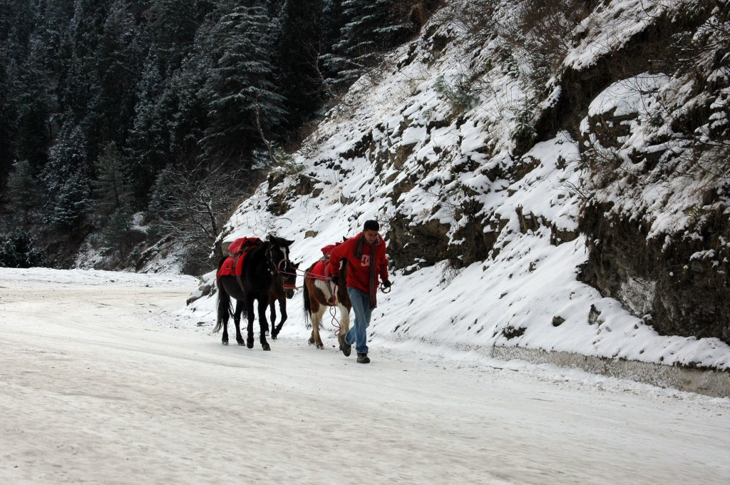 Snowfall in Kufri | Hill Post