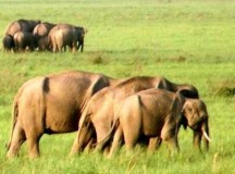 Army ammunition depot preventing green corridor for elephants in Uttarakhand