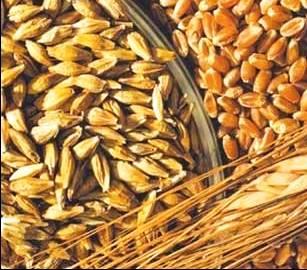 Food Grain Stocks - India