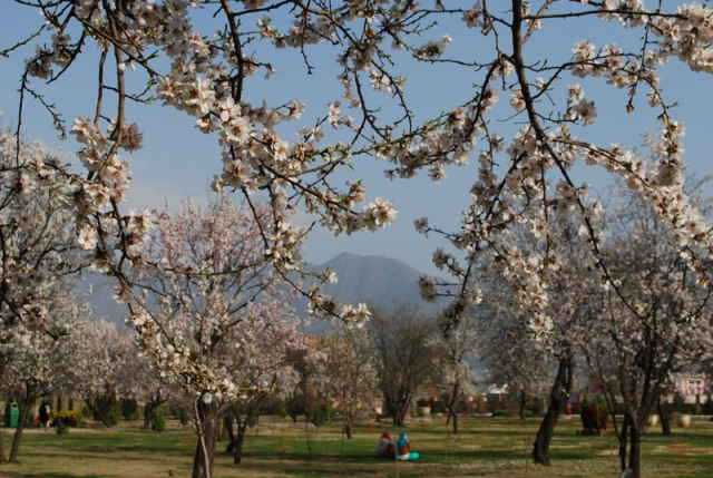 spring in kashmir essay Free essays on spring in kashmir - brainiacomcheck out our top free essays on spring in kashmir to help you write your own essayvery short essay on spring season.