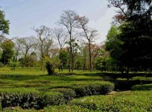 Old charm of Palampur fast fading out