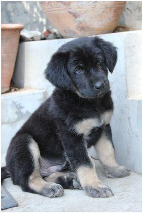 Gaddi Dog Names | 2014 Petschoices.org