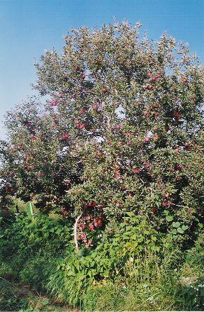 PRADIP PDF DELHI KRISHEN TREES OF