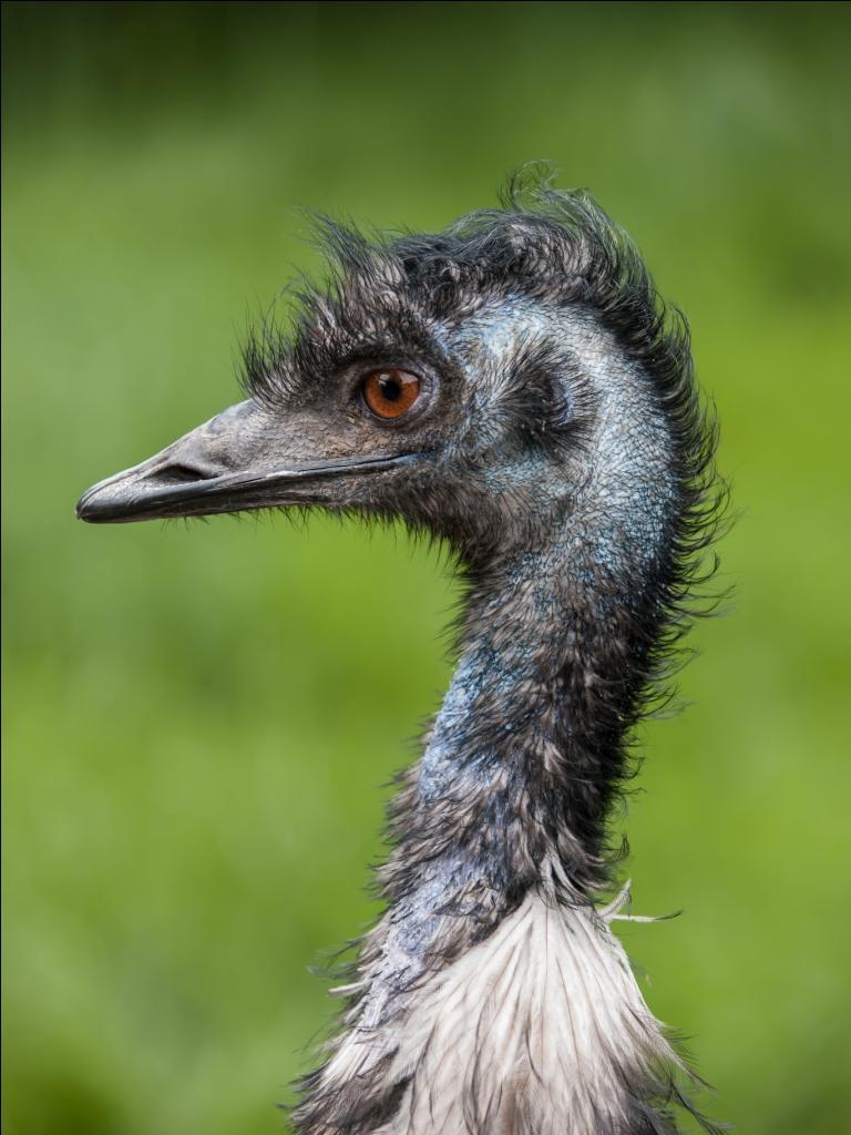Emu Bird Farming Palampur Himachal