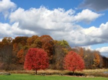 Fall season colors in East Coast of America: Poconos