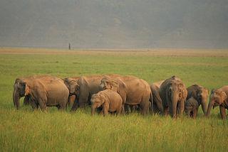 An_elephant_herd_at_Jim_Corbett_National_Park