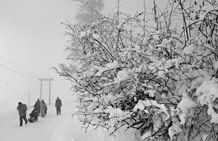 Fresh Snowfall in Kashmir