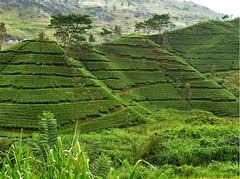 Himachal Pradesh - Agriculture3