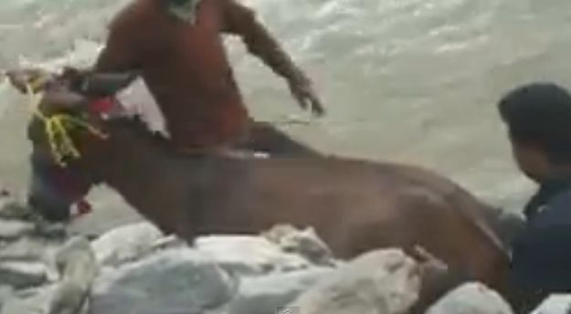 Uttarakhand authorities need a thought for these beasts of burden
