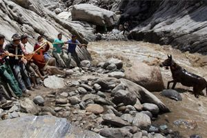Uttarakhand authorities need a thought for these beasts of burden_1