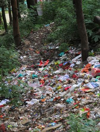 Polythene Makes A Comeback In Shimla Dense Forest Turns