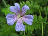 flower_rain_sm.jpg
