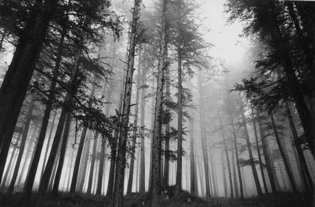 ghnp-forest.jpg