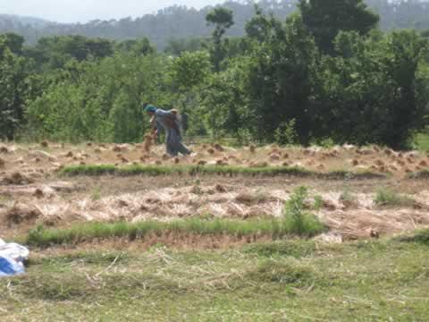 woman-farmer.jpg