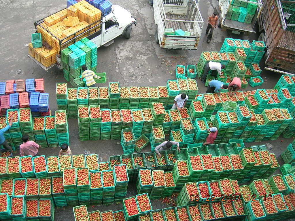 tomato-pix.jpg