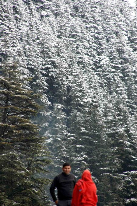 snow-in-shimla.jpg