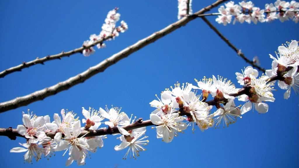 Blossom at Shuru 2