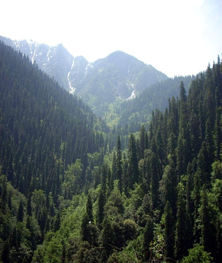 ghnp-forests