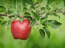 apple photo 1