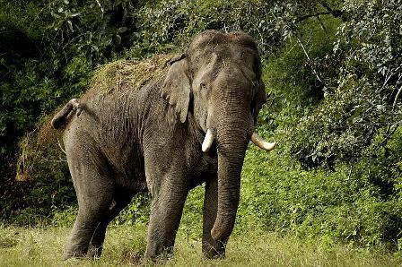 Man-elephant conflict over territory in Uttarakhand – Experts