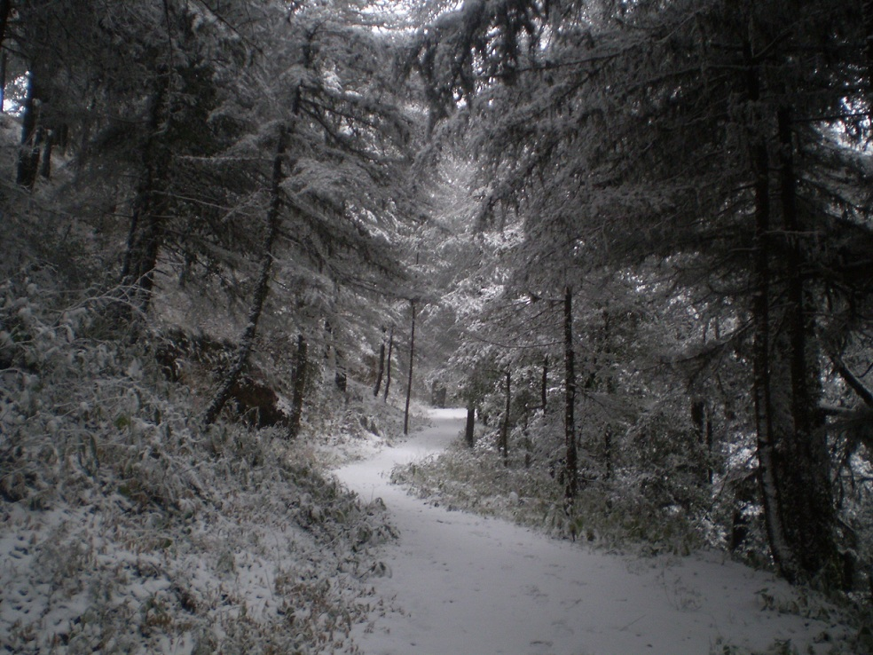 Forest trail in Shimla after fresh snowfall