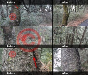 Electricty Wires Nailed on Trees (Before & After) - Himachal Watcher, how to use eSamadhan, Shimla News, Himachal Pradesh News, Activism