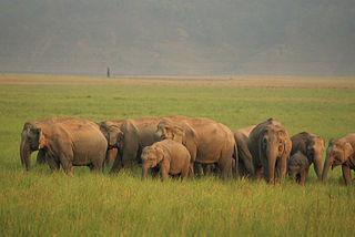 An_elephant_herd_at_Jim_Corbett_National_Park