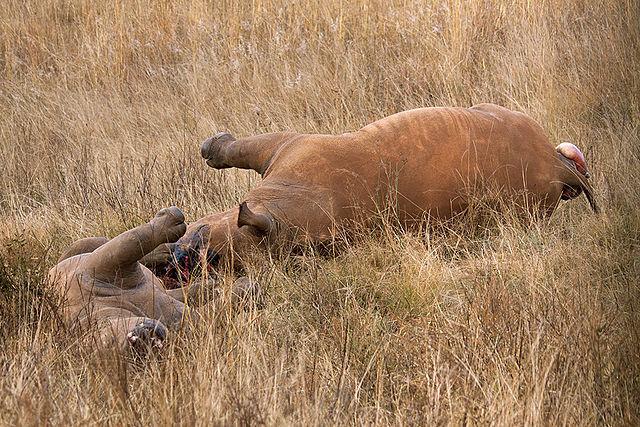 Rhino_poaching_Uttarakhand