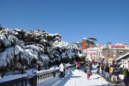 Snow_Shimla