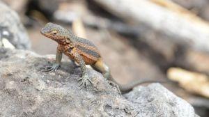 reptile species