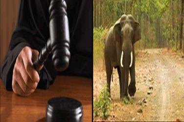 Judiciary finally comes to help of wild life in Uttarakhand