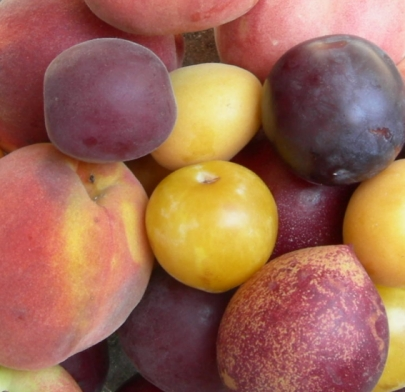 Stone Fruits in Himachal