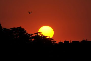 A bird flies during sunset on World Earth Day in Shimla