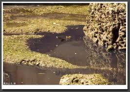 Contaminated Ground Water