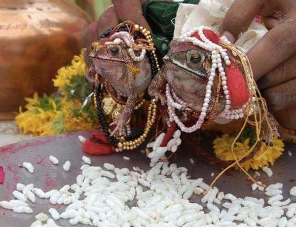 Frog Wedding in Maharashtra_1