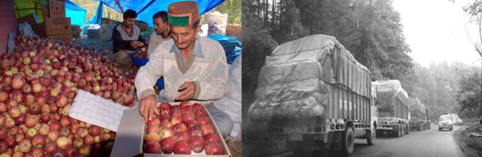 Himachal to soon have another apple cold storage