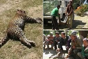 reducing green cover increasing man-animal conflict in Uttarakhand_3