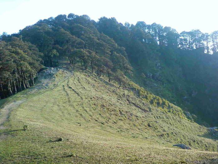 Ex-servicemen re-greening Himachal hills