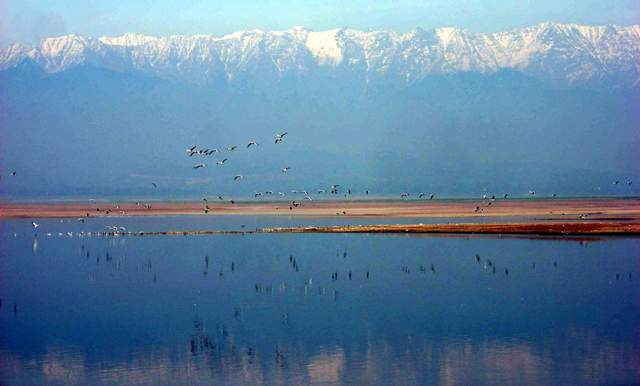 Dhauladhar backdrop of Pong wetland: Photo by Sanjeeva Pandey