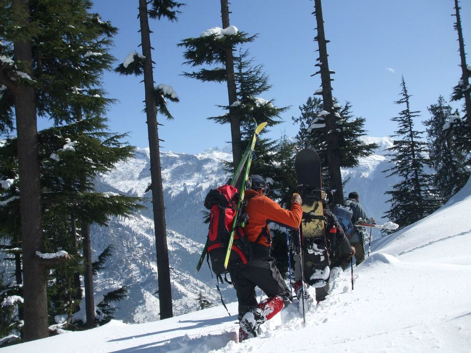 Backcountry skiing in Manali jungle