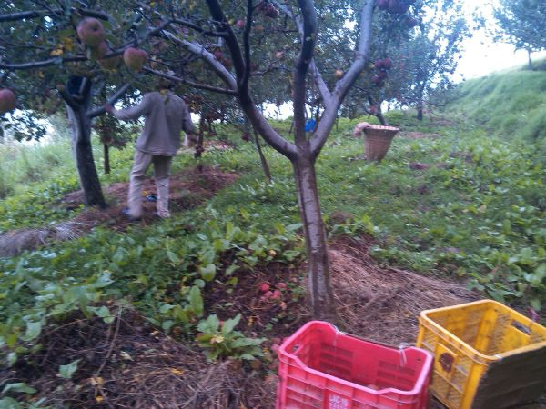 Day in a Life of Apple Farmer_4