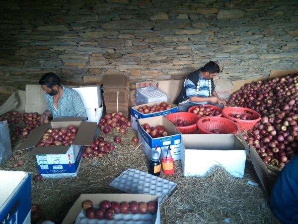 Day in a Life of Apple Farmer_5