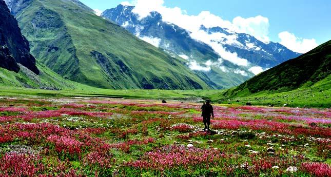 valley-of-flowers-trek1